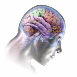 cerveau cognitif